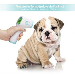 thermomètre intey temperature chien